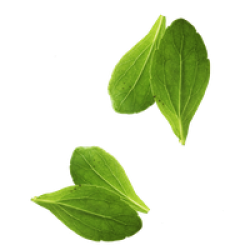 vegetable-basil-leaves-leaf-free-transparent-image-hq-thumb