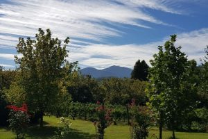 View of Mt Bogong